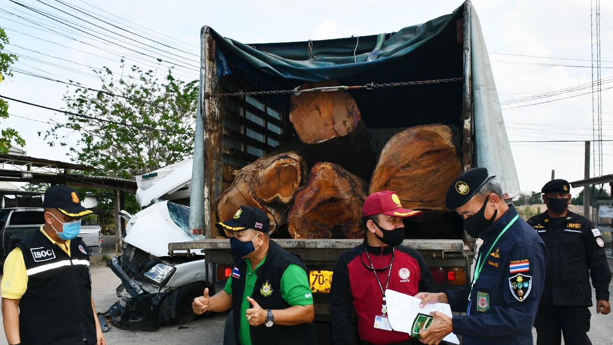 เด้ง 2 หัวหน้าป่าไม้ เซ่นจับรถบรรทุก ไม้ประดู่ยักษ์ 100 ปี ลอบตัดจากป่าสงวน