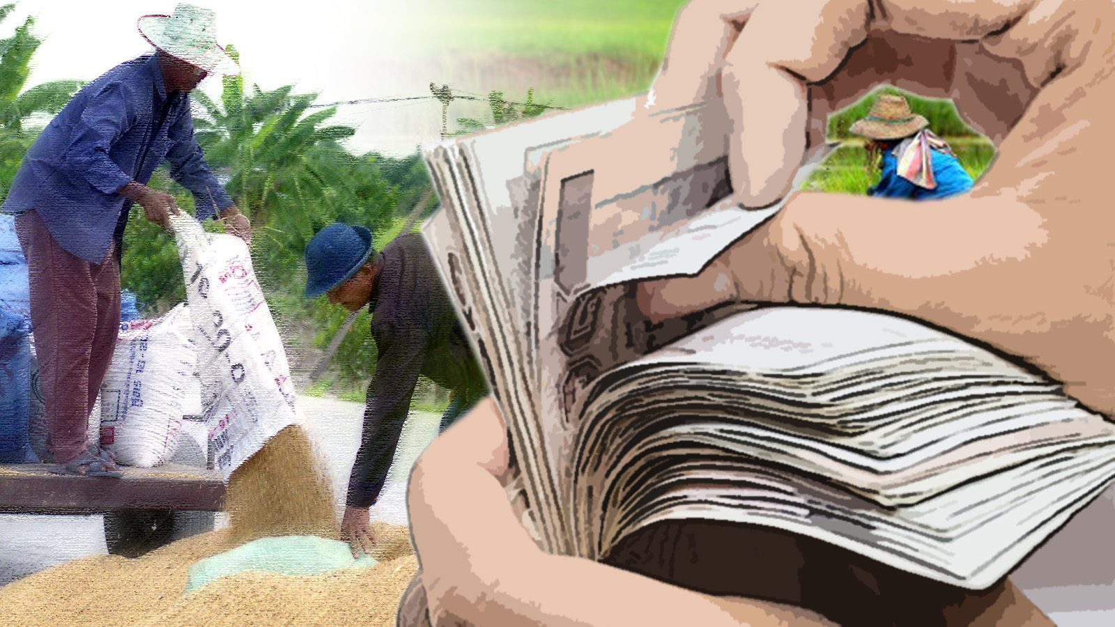 ธ.ก.ส.เร่งจ่ายเงินเยียวยาเกษตรกรเดือนแรกภายใน 31 พ.ค.นี้ คาดรับสิทธิกว่า 8 ล้านราย