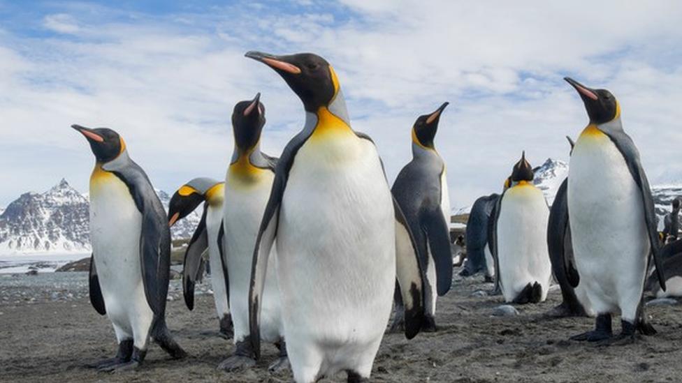 เพนกวินที่แอนตาร์กติกาขับถ่ายก๊าซหัวเราะออกมามากเกินไป ทำเอานักวิจัยขำกลิ้งจนแทบหยุดไม่ได้