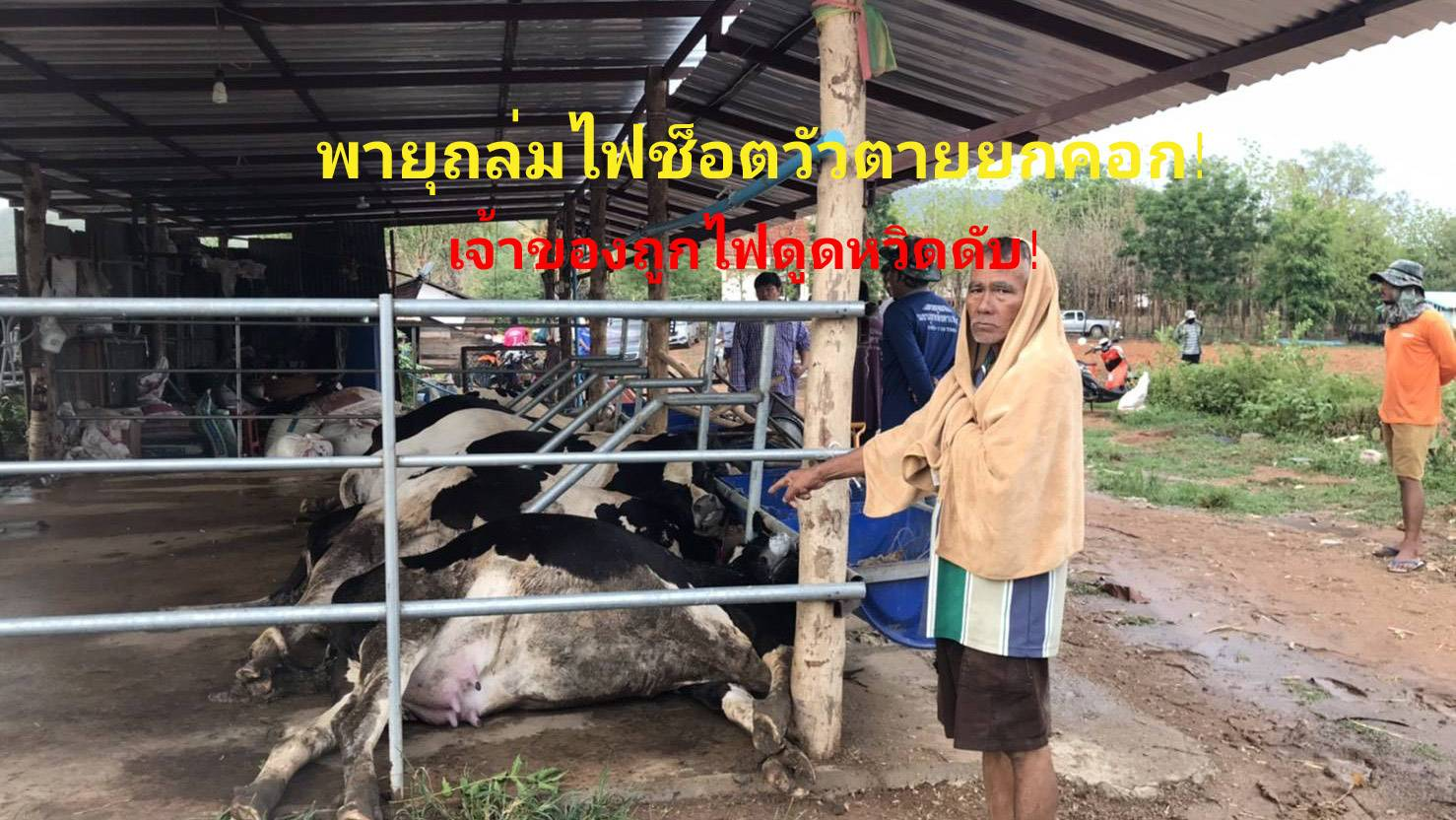 พายุถล่มพัดคอกวัวพังไฟช็อตวัวตายยกคอก เจ้าของพยายามเข้าช่วยถูกไฟดูดหวิดดับ (คลิป)