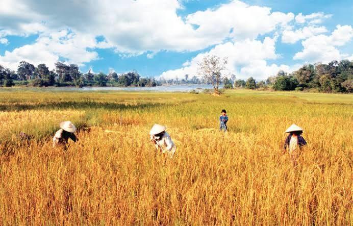 ชงก.เกษตรฯ เคลียร์สิทธิเยียวยาเกษตรเคสเสียชีวิต 1แสนราย  ติดต่อทายาทรับ1.5 หมื่นบ.