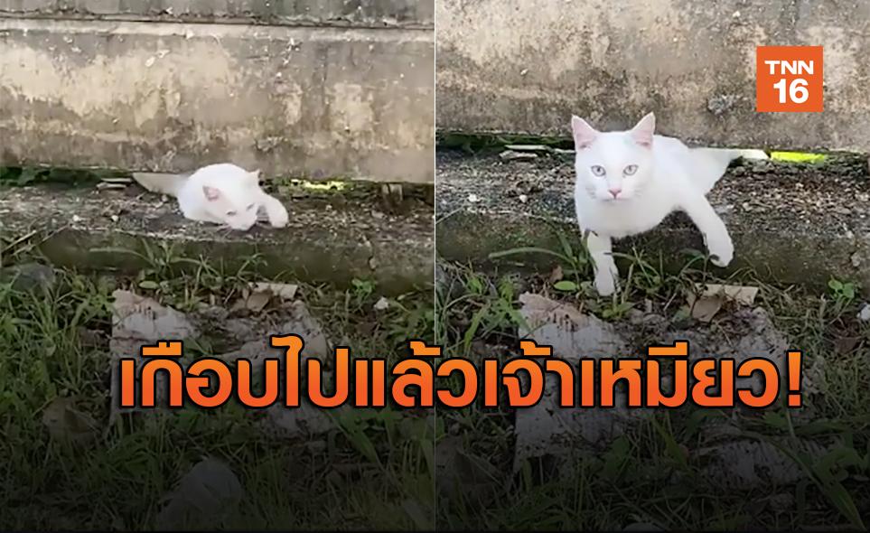 นาทีชีวิต! แมวแอบหนีไปเที่ยว ตอนกลับความตายติดตามมาด้วย!