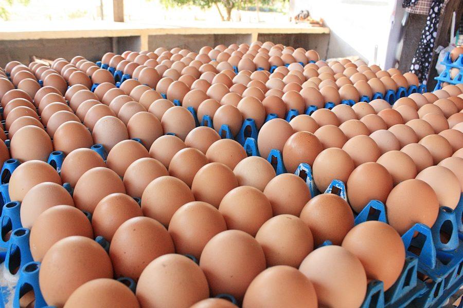 ผู้เลี้ยงไข่ไก่ โชว์วิธีแก้ปัญหาล้น-ราคาตก แนะแทรกแซงซื้อเท่าราคาทุนจากรายย่อย