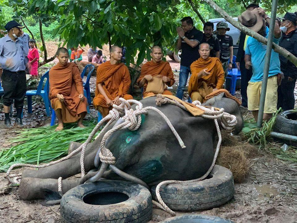 ผลพิสูจน์ช้างป่ากุยบุรีล้มในสวนขนุน สาเหตุติดเชื้อในหลอดอาหาร