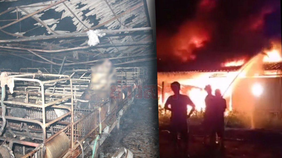 สลดใจ! ไฟไหม้ฟาร์มหมูขนาดใหญ่ ย่างสดหมูแม่พันธุ์ตายกว่า 100 ตัว