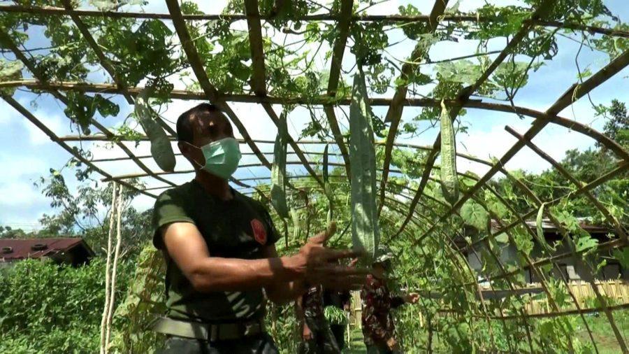 นรา-ทหารพันธุ์ดีวางปืน-ทำเกษตรทฤษฎีใหม่ช่วงโควิด-19