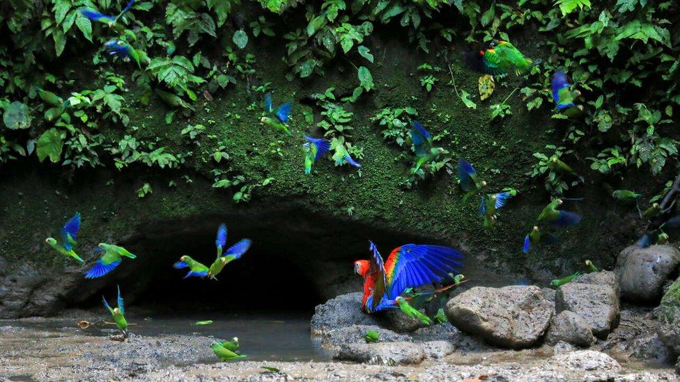 วันสิ่งแวดล้อมโลก : แอมะซอน ผืนป่าสำคัญของโลกกำลังตกอยู่ในอันตราย ทั้งตัดไม้ ไฟป่า และโควิด-19