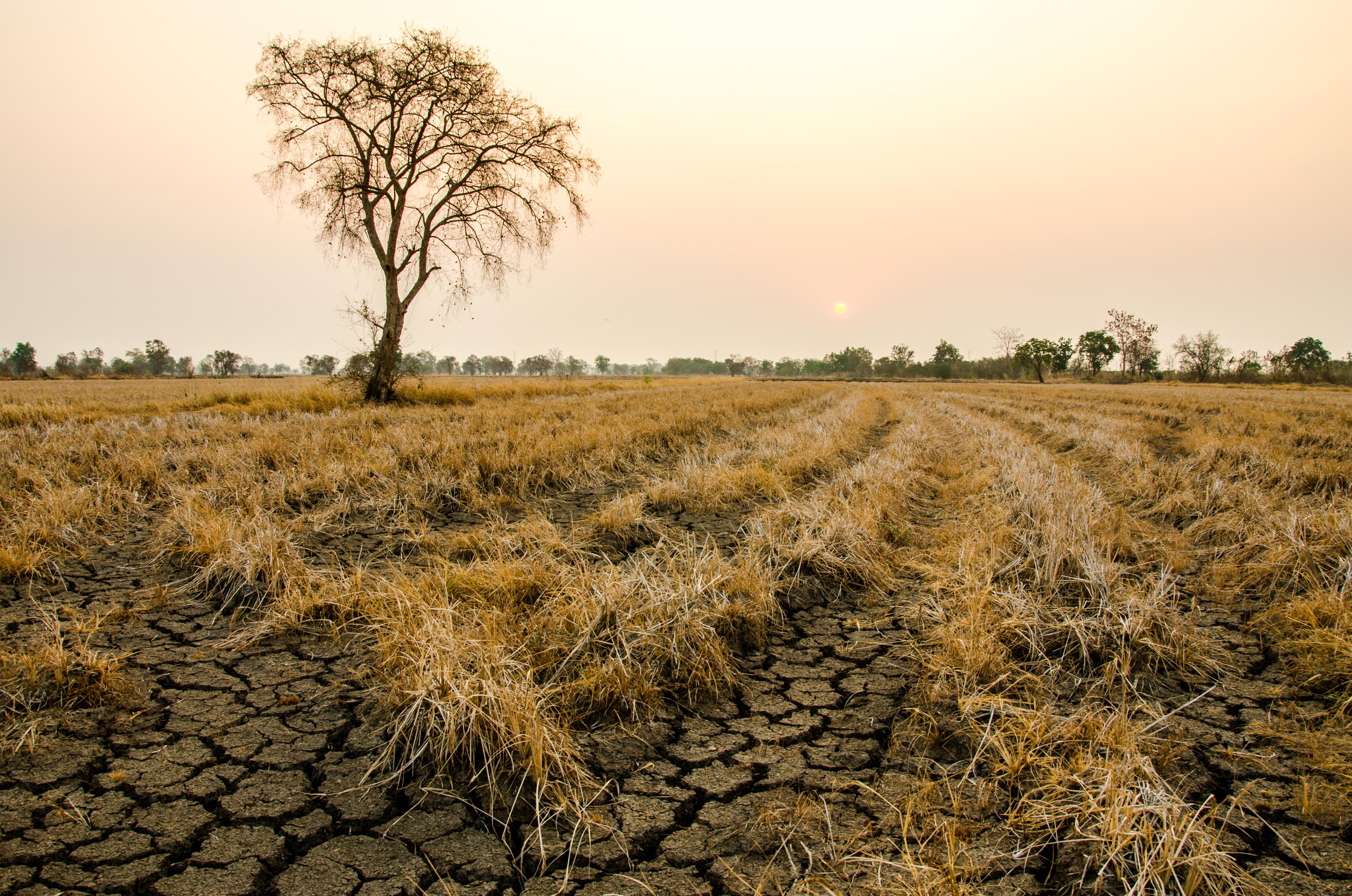 11 จังหวัดเจอภัยแล้ง เขื่อนหลักน้ำน้อยส่งผลกระทบเกษตรกรทั่วไทย