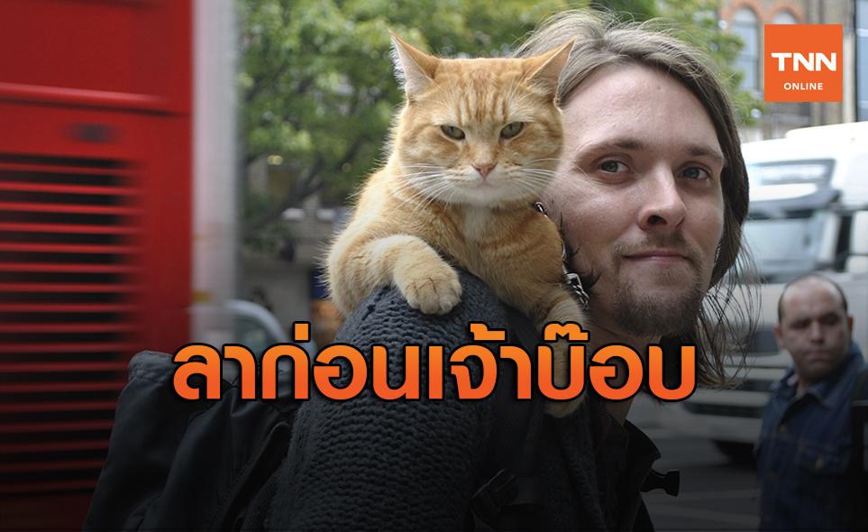 สุดเศร้า! 'เจ้าบ๊อบ'แมวชื่อดังของโลกไปดาวแมวแล้วด้วยอายุ 14 ปี