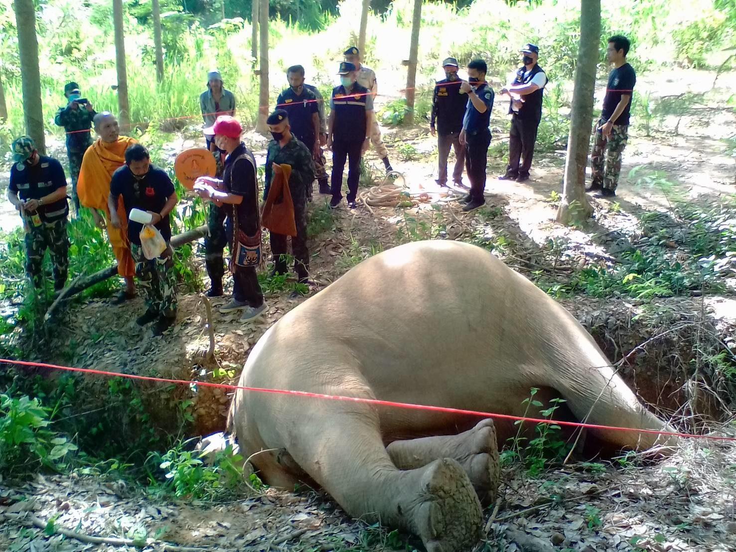 """กรมอุทยานแห่งชาติฯ เร่งดึงแนวร่วมแก้วิกฤต """"ช้างป่ากุยบุรี"""" ตายผิดธรรมชาติ"""