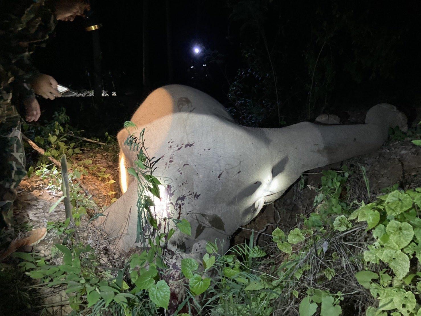 ช้างป่ากุยบุรีถูกมนุษย์ใจเหี้ยมใช้ปืนลูกซองไล่ยิงตาย 4 ตัวในรอบเดือน