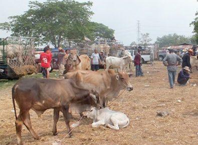 'ประภัตร'ดันเกษตกรเลี้ยงโคเนื้อป้อนตลาดต่างประเทศ หลังพบความต้องการมากถึง 1 ล้านตัวต่อปี
