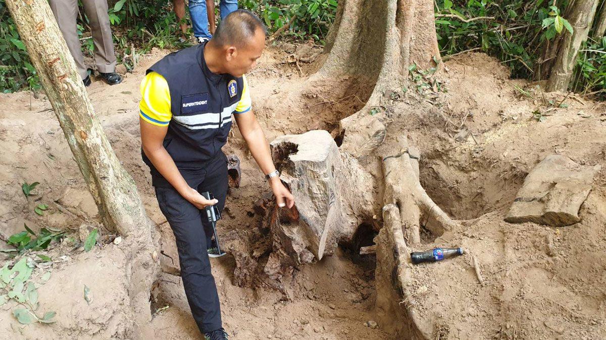 ตร.ไล่จับ 2 โจร ลอบตัดตอไม้พะยูงกลางป่า ยึดของกลางเต็มท้ายกระบะ