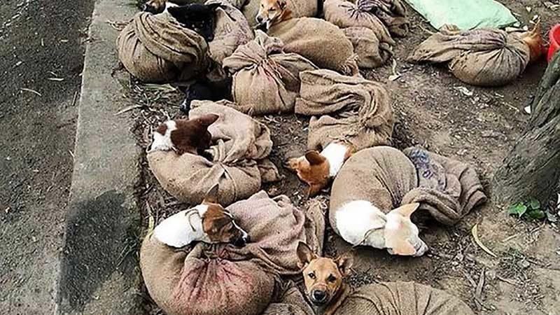 สุนัขในอินเดียโชคดีอีก รัฐนาคาแลนด์สั่งยุติซื้อขาย-กินเนื้อหมา