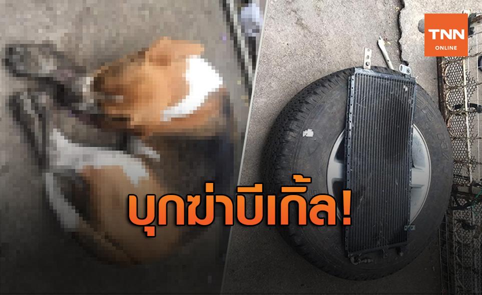 สะเทือนใจคนรักสัตว์! โจรแอบเข้าบ้านฆ่าหมาบีเกิ้ลซ่อนไว้ใต้ยางรถ