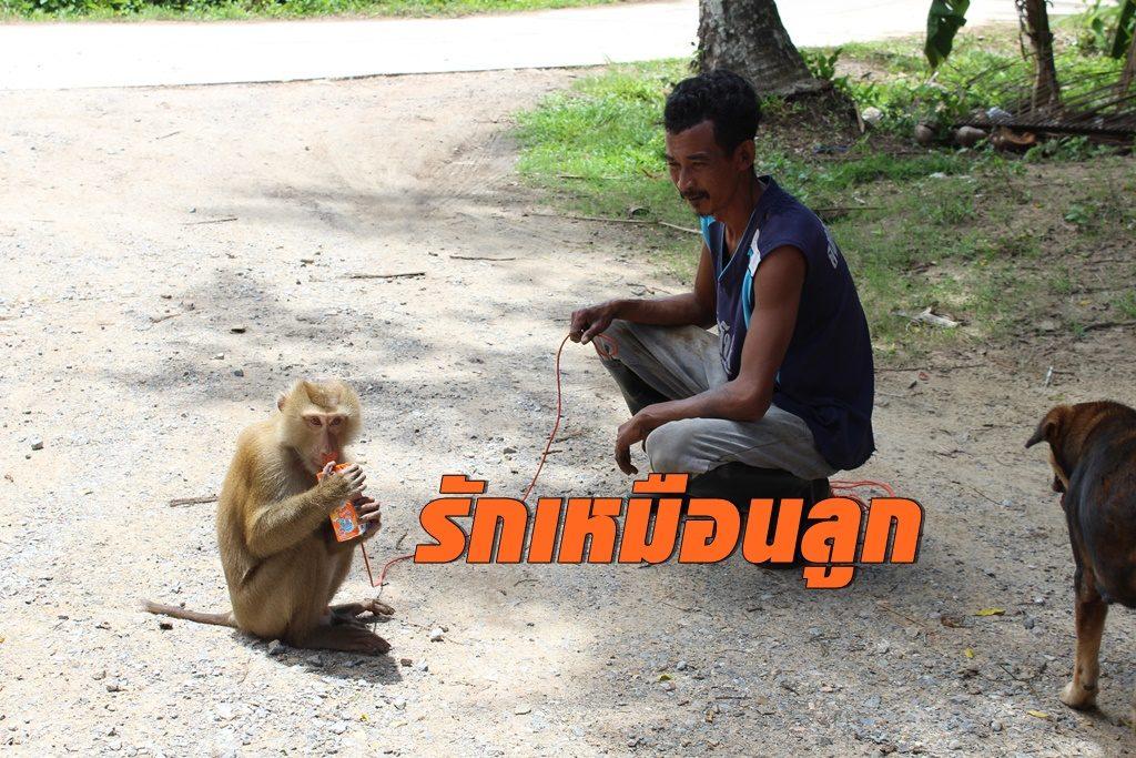 เจ้าของ ร.ร.สอนลิงเก็บมะพร้าว จ.ชุมพร ยันเคยไม่ทรมานสัตว์ รักทุกตัวเหมือนลูก