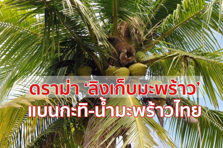 ลิงเก็บมะพร้าว เป็นเหตุแบนกะทิ-น้ำมะพร้าวไทย สั่งทูตพาณิชย์เร่งแจงอังกฤษ