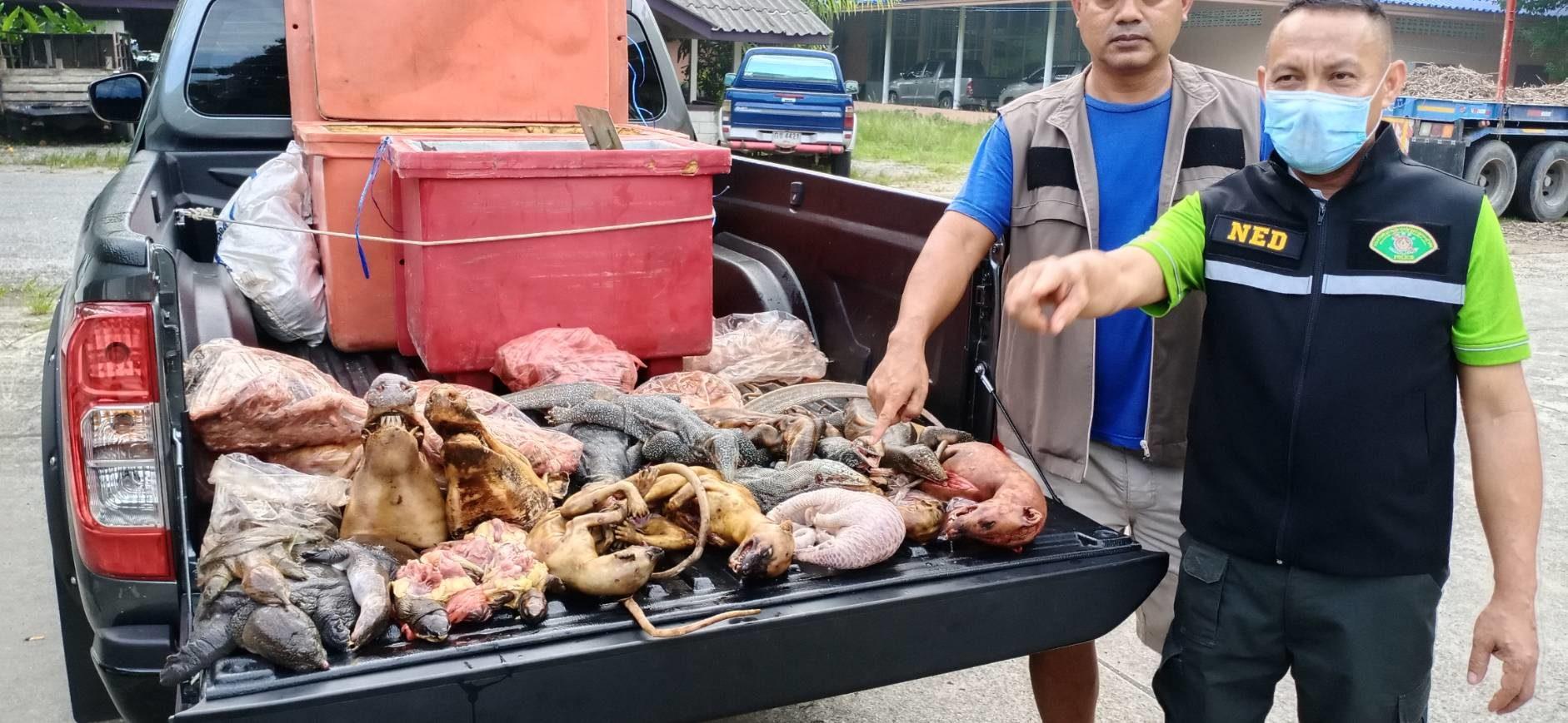 ตำรวจ ปทส.พัทลุง จับพ่อค้าลักลอบขนซากสัตว์ป่าคุ้มครอง
