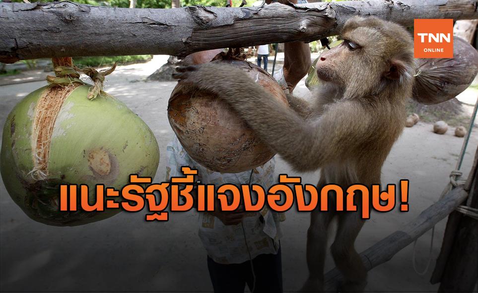 """องค์กรสัตว์ฯ แนะรัฐหนังสือชี้แจงกรณีใช้ """"ลิงเก็บมะพร้าว"""""""