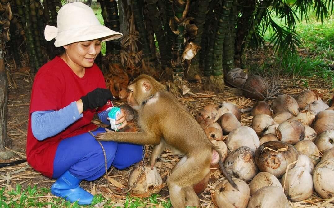 ลูกสาว 'ลุงสมพร คนสอนลิง' เชื่อ ตปท.ไม่เข้าใจวิถีชาวสวนมะพร้าว ยันไม่ทรมาน ดูแลเหมือนครอบครัว