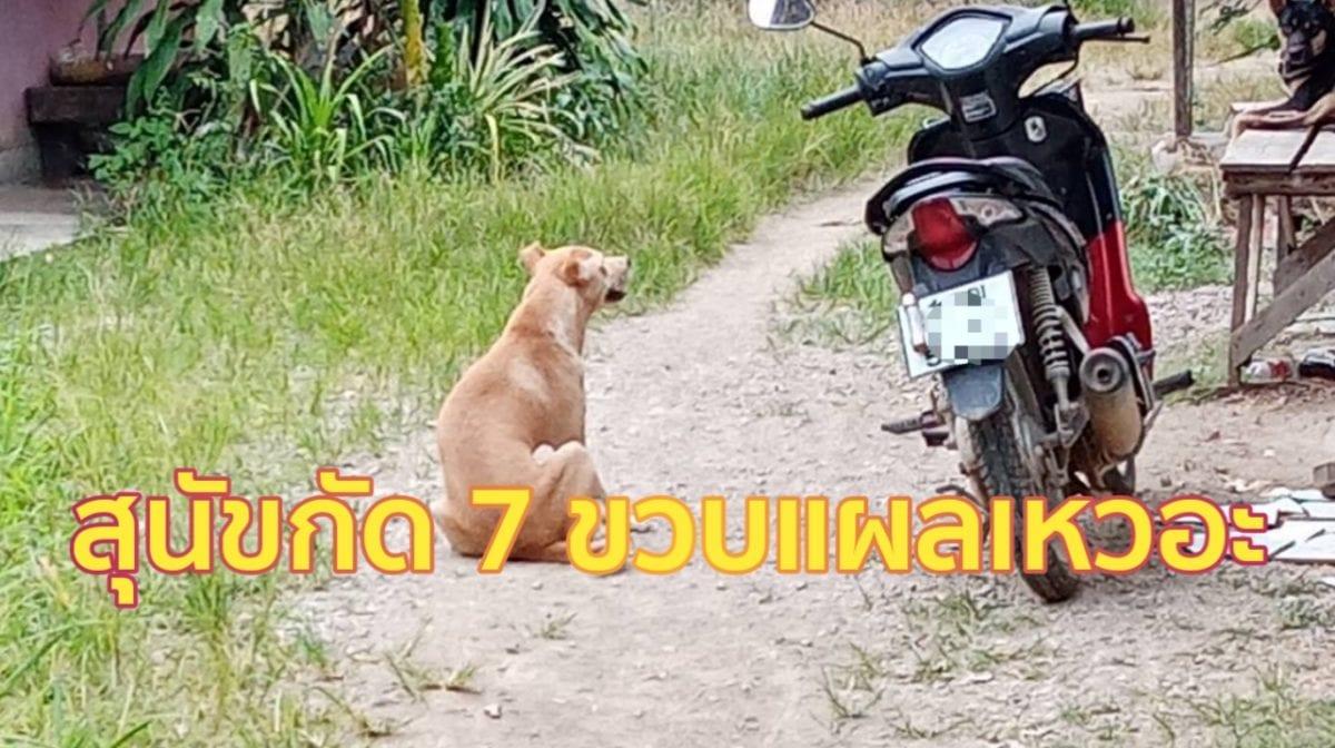 กระบี่-สุนัขกัดเด็ก 7 ขวบแผลเหวอะ ด้านแม่เด็กเรียกร้องให้เจ้าของรับผิดชอบ (ชมคลิป)