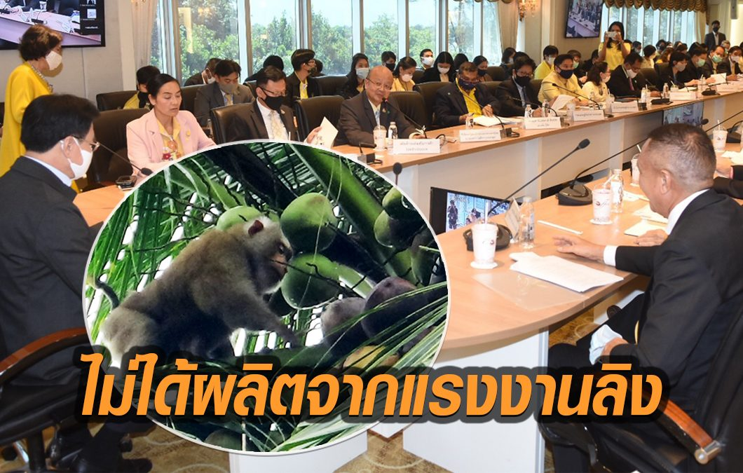 พณ.ถกผู้ส่งออก เล็งใช้ 'รหัสตรวจสอบย้อนกลับ' ยืนยันกะทิไทยไม่ได้ผลิตจาก 'ลิงเก็บมะพร้าว'