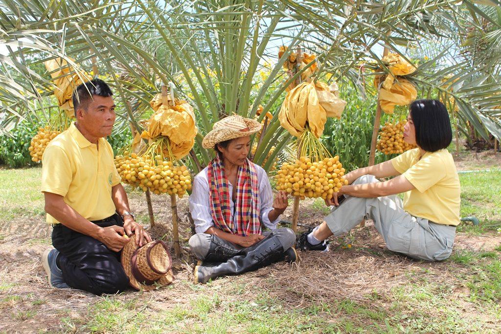 ททท.ราชบุรี ชวนเที่ยวสวนพุทธา ผาลัม ผสมผสานดอกแก่นตะวัน
