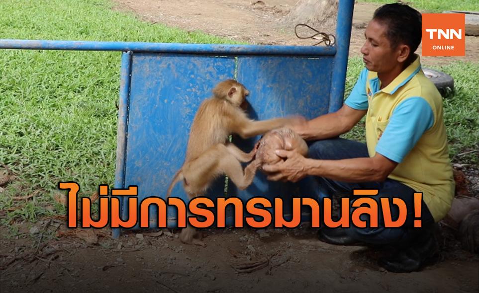 สื่อนอกตีข่าวครูฝึกลิงโต้ PETA ไม่มีทรมานสัตว์-ภูมิปัญญาดั้งเดิม