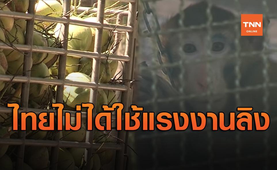 กต.สั่งทำความเข้าใจต่างชาติ ไทยไม่ได้ใช้แรงงานลิงเก็บมะพร้าว