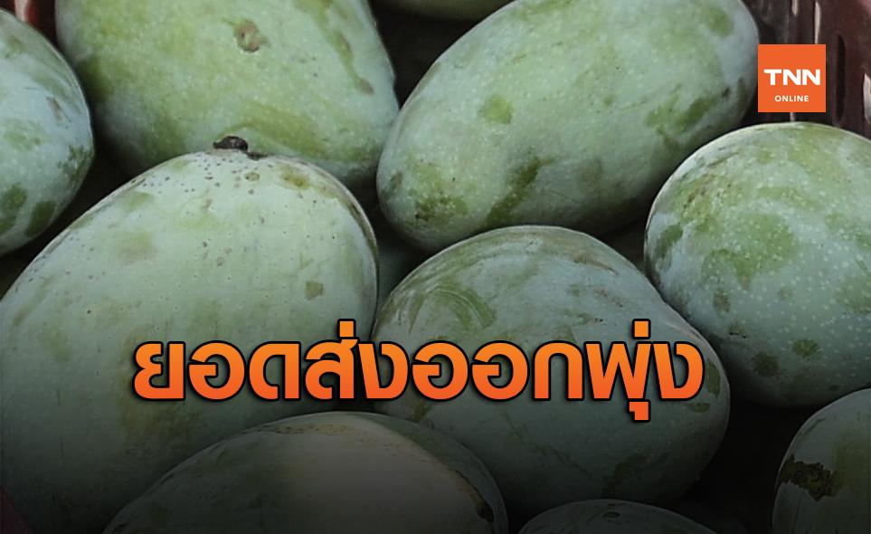 สวนทางโควิด! มะม่วงไทยทำยอดส่งออก5เดือนแรกปี63 กว่า5.7ตัน