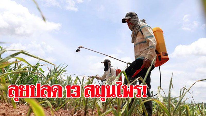 เกษตรฯลุยปลด 13 สมุนไพรจากวัตถุอันตราย เปิดทางพัฒนายาปราบศัตรูพืชทดแทน หลังแบน 3 สาร