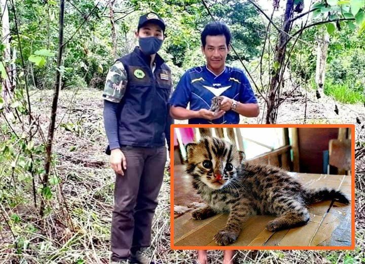 ชาวมอญเมืองกาญจน์พบ 'ลูกแมวดาวหลงป่า' วิ่งจากพงหญ้า อุ้มส่งศูนย์ช่วยเหลือ