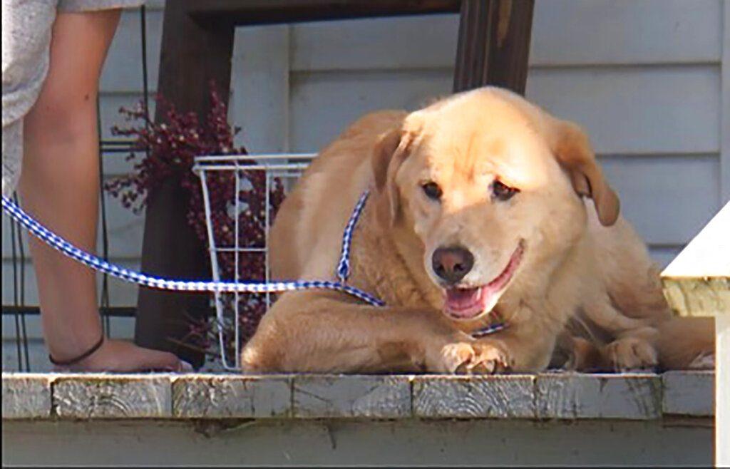 หมาหายตัวไป ที่แท้เดินไกลข้ามรัฐ 80 กิโลเมตร กลับไปบ้านหลังเดิม