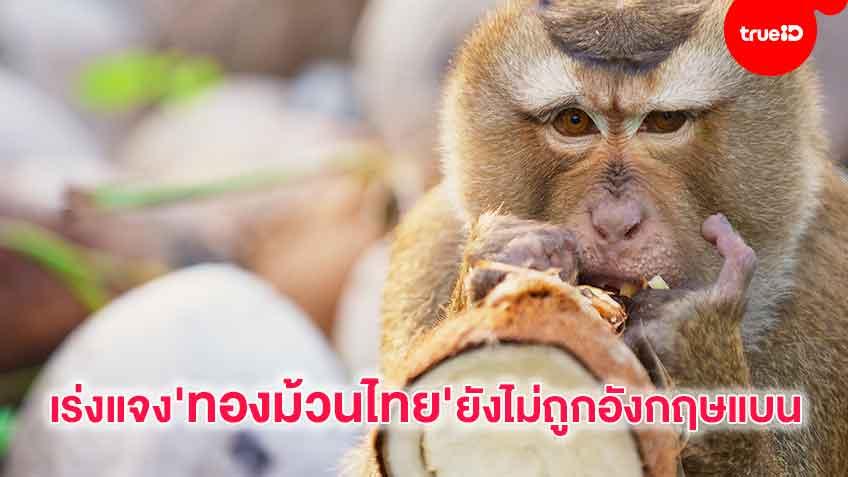 'ลิงเก็บมะพร้าว'ทำวุ่น เอกชนเร่งชี้แจงทองม้วนไทยยังขายในอังกฤษได้