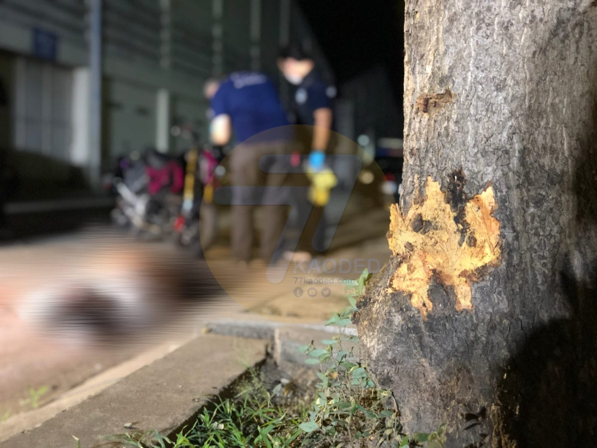 นนทบุรี ชายวัย 49 ปีควบ จยย.เสียหลักชนต้นไม้ในโรงงานเสียชีวิต