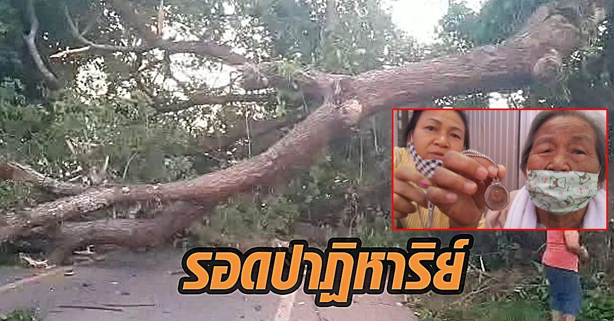 รอดปาฏิหาริย์! ต้นก้ามปูยักษ์ 100 ปี หักโค่นทับรถครูขณะพาแม่ฟอกไตเชื่อบารมีเกจิดัง