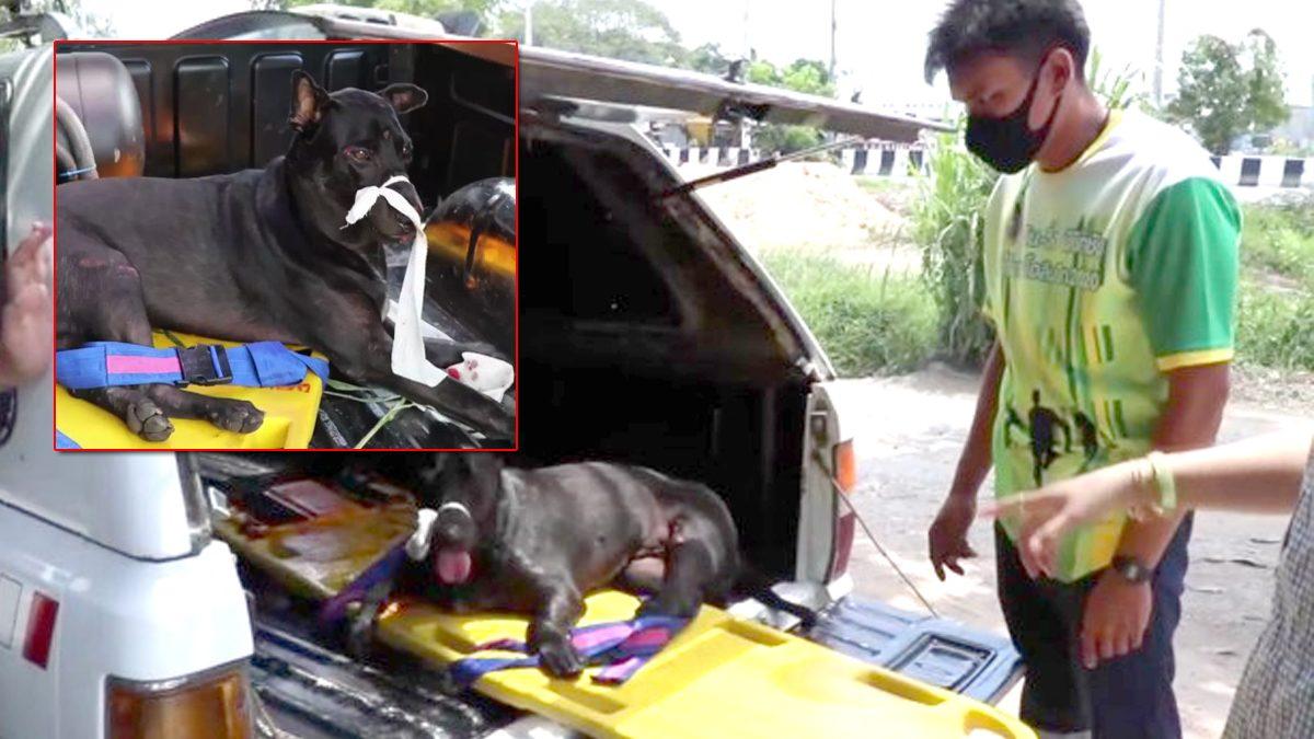 ตามหาเจ้าของ พบหมาพลัดตกรถยนต์ เจ็บหนัก-ขาหัก กู้ภัยเข้าช่วย