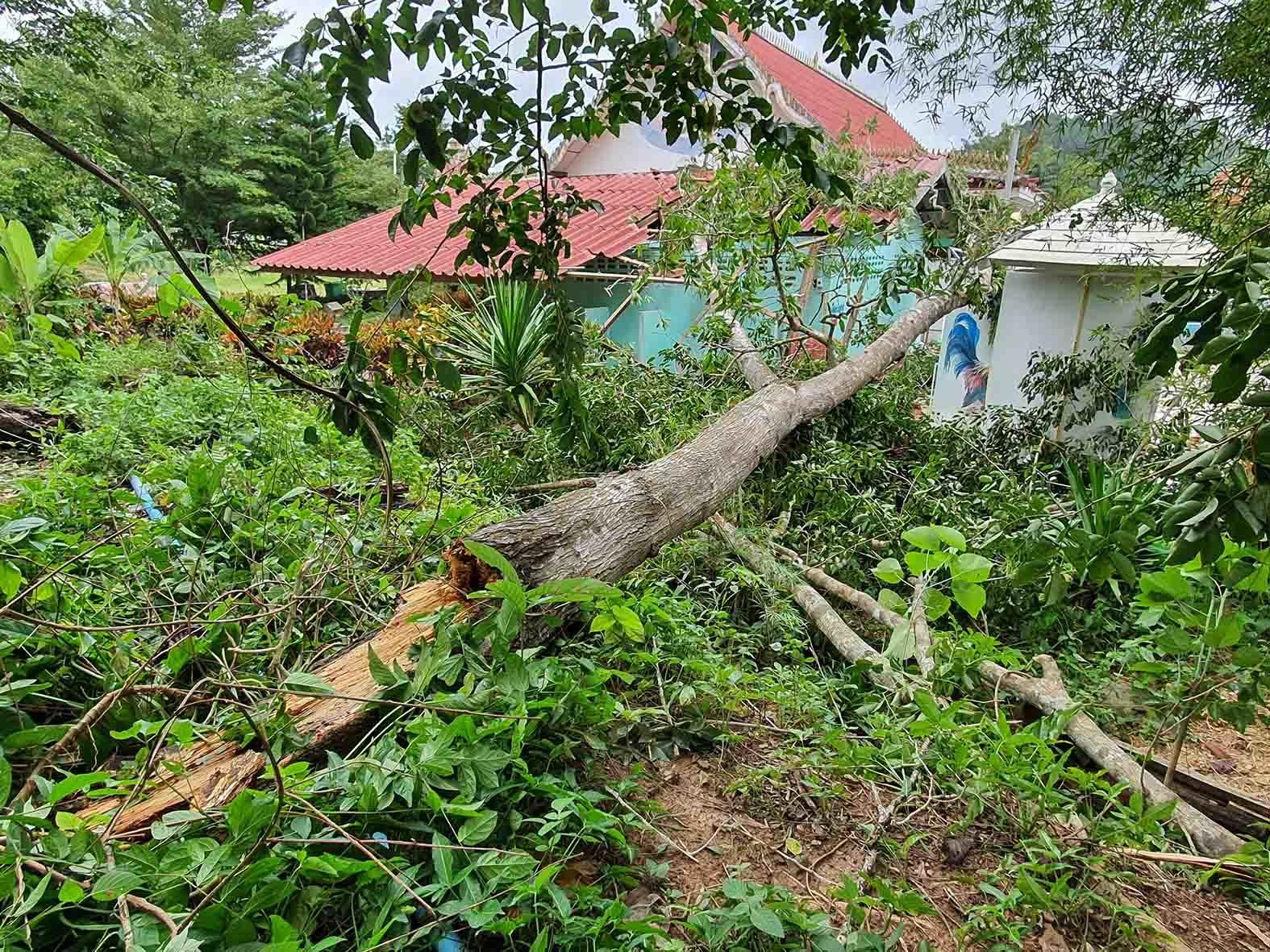 พายุถล่มชุมพร ทำสวนทุเรียนเสียหายยับ-ไฟฟ้าดับ-มือถือใช้ไม่ได้