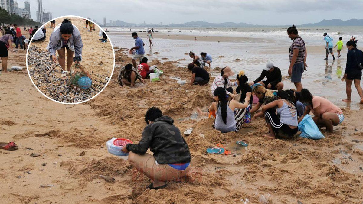 ชาวบ้าน แห่เก็บหอย พายุซินลากู ซัดเกลื่อนชายหาดจอมเทียน (คลิป)