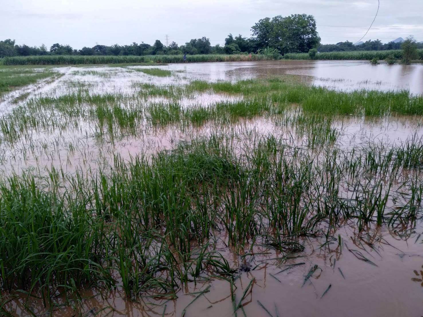 'พายุซินลากู' สร้างความเสียหายพื้นที่เกษตร 10 จังหวัด หลังพัดนาข้าวเสียหาย 1.8 หมื่นไร่