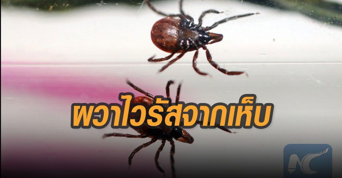 มาใหม่! ไวรัส มีเห็บเป็นพาหะ ระบาดในจีนดับแล้ว 7 ผู้เชี่ยวชาญชี้ติดจากคนสู่คนได้