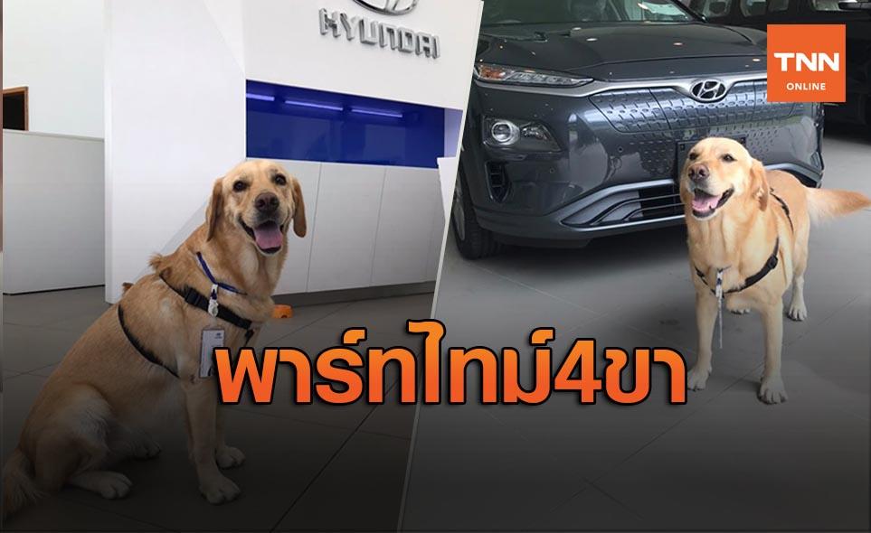 เมืองไทยก็มี! น้องโอนลี่ พนักงานสี่ขาประจำโชว์รูมฮุนได