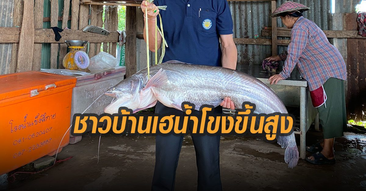 หนองคาย น้ำโขงขึ้นสูงในรอบปี ชาวบ้านดีใจจับปลาตัวใหญ่ได้