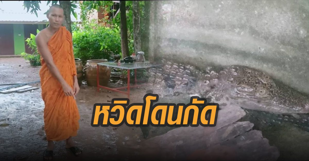 ระวังภัย! หลวงพี่หวิดถูกจระเข้กัด ขณะเดินไปเข้าห้องน้ำ!!เหตุฝนตกหนักบ่อเลี้ยงไม่แข็งแรง
