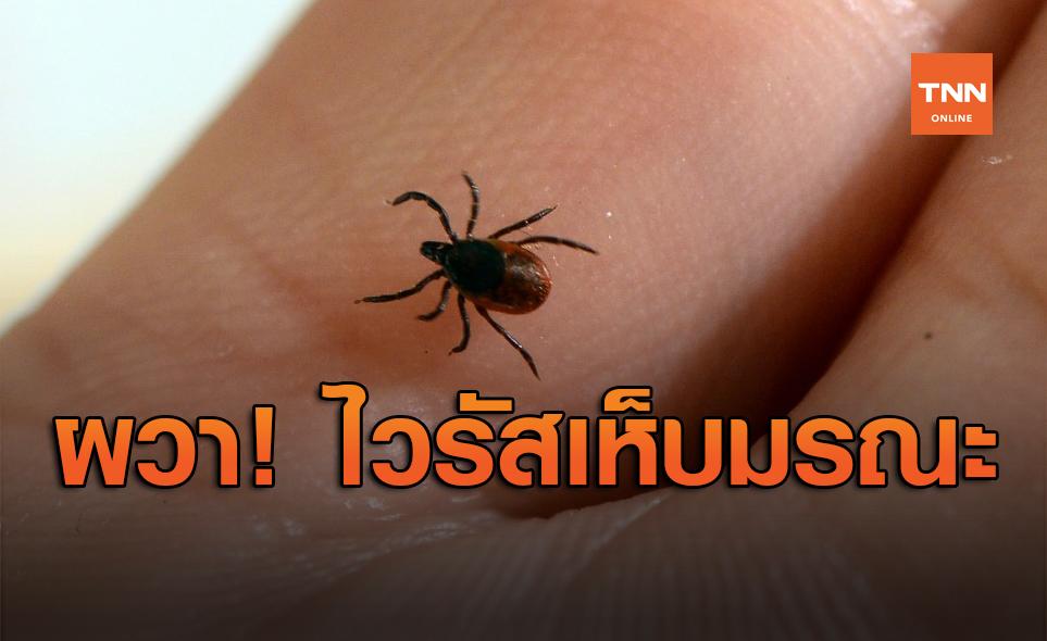 ผวา! ไวรัสเห็บมรณะคร่าชีวิตชาวจีน ติดเชื้ออีกครึ่งร้อยแล้ว