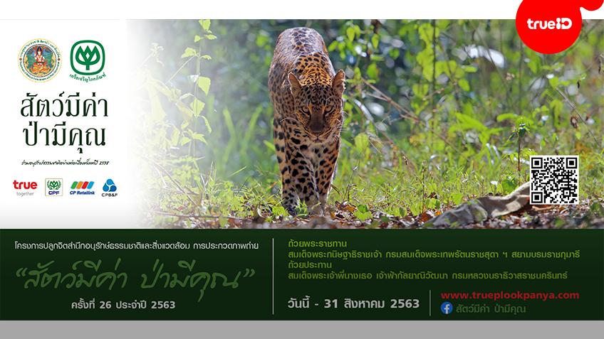 เปิดโครงการประกวดภาพถ่าย 'สัตว์มีค่า ป่ามีคุณ'