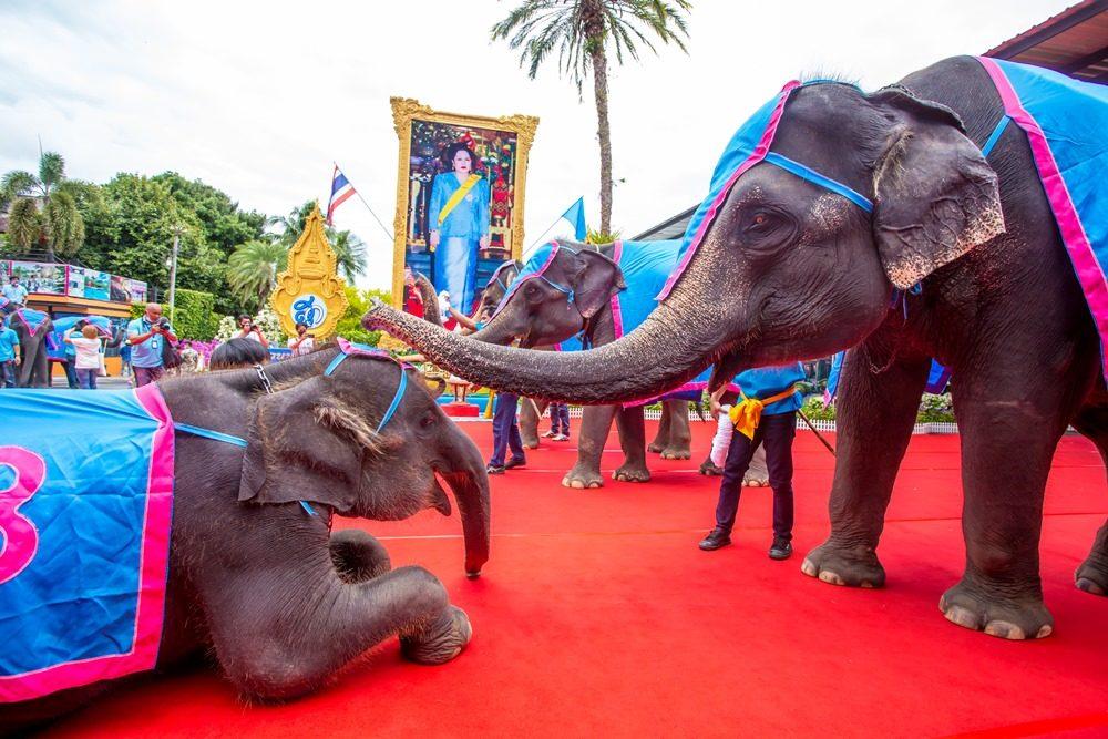 'สวนนงนุชพัทยา' จัดใหญ่ เที่ยวฟรี 'วันแม่' พา 'ช้างแสนรู้' ร่วมมอบมาลัย