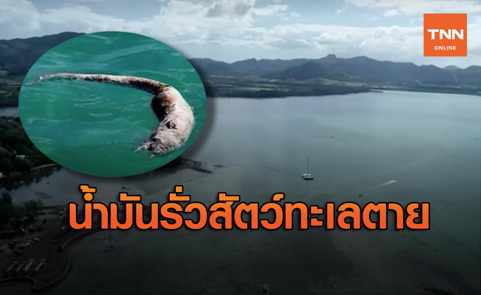 สัตว์ทะเลลอยตายหลังเรือน้ำมันอับปางในมอริเชียส