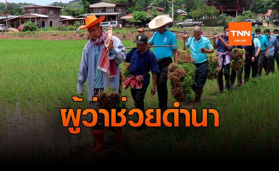 ผู้ว่าฯ ลงแขกดำนา ช่วยชาวบ้าน หลังถูกน้ำป่าซัดเสียหาย
