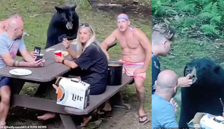 หมีตีเนียนเข้ามาร่วมวงมนุษย์ นั่งรอแซนด์วิชเนยถั่ว กินจากมือ!